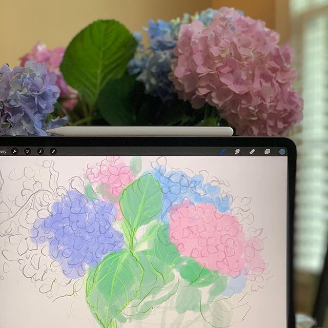 Just can't stop admiring these beautiful vibrant hydrangeas that I picked from my backyard today!! Time to sketch them now