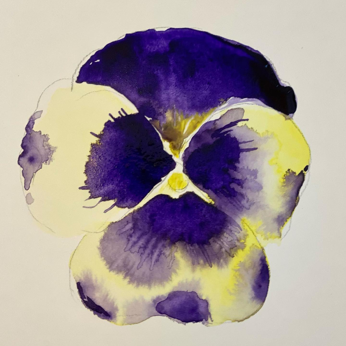 Pansy is often used as a get well flower. To all of you who are feeling under the weather hope this one brings you good healing vibes! Get well soon!