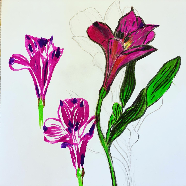 Purple peruvian lily