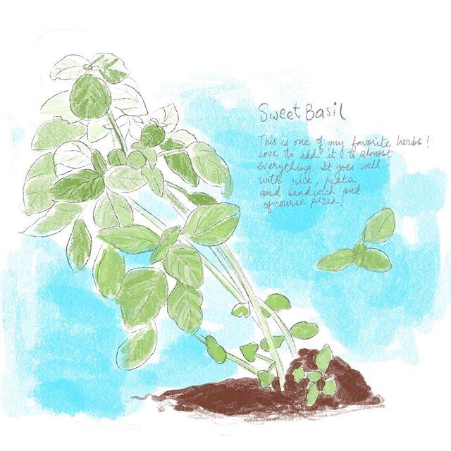 Sweet Basil...
