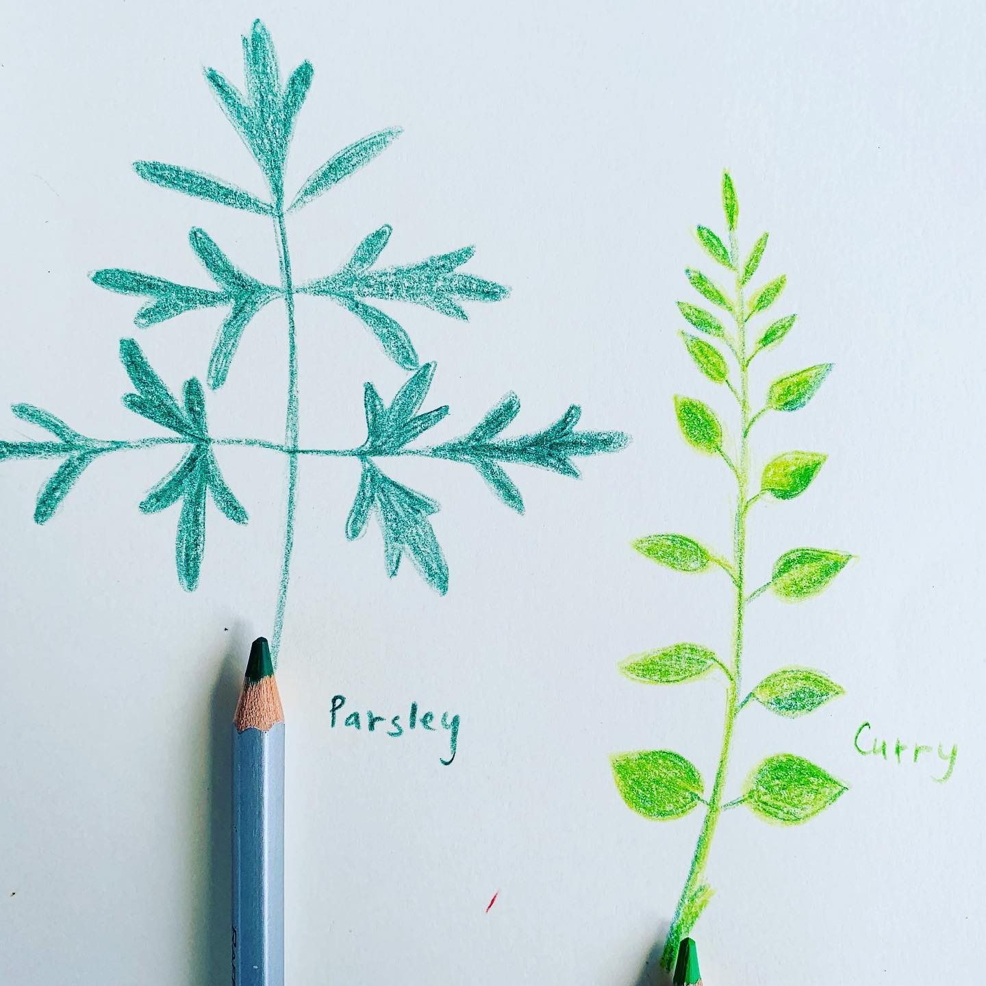 When you have no intention to cook, you sketch your herbs! Lunch will take care of itself!